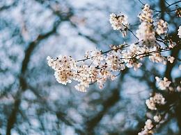 东京の樱花