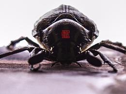 超现实主义古代画风微距摄影 甲虫