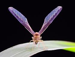瓜哥生态微距-虫儿飞