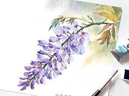 【紫藤萝】对你执着,一袭清新淡紫色