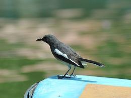 在被旅者忘记的免费公园,那些鸟儿们
