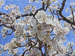 花木皆禅——梨花