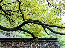 雨后的杭州-杭州出差小记