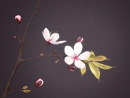 樱花花枝 sakura