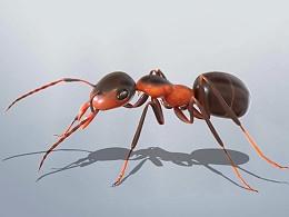 小蚂蚁 会爬的哟