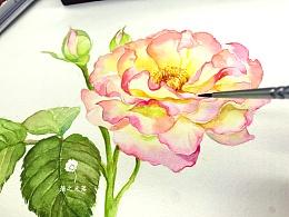 【从零学会画水彩】《月季花》花卉篇vol.22