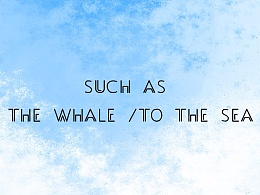 【百涂斩】whale鱼鱼