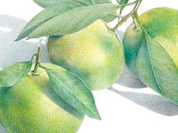 蜜桔(从素描到彩铅)