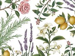 植物精油包装插画