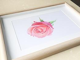 彩铅练习-《玫瑰》