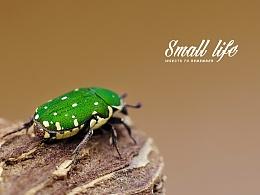 微距摄影:小昆虫