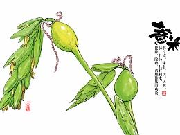 红豆薏米粉包装 字体 插画
