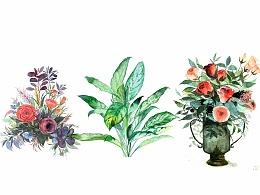 花卉植物3张