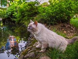宠物摄影~猫咪咪NO1
