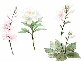 水彩花卉~附过程