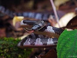 瓜哥生态片-各种毒蛇