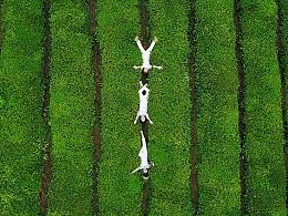 掉进绿野仙踪。