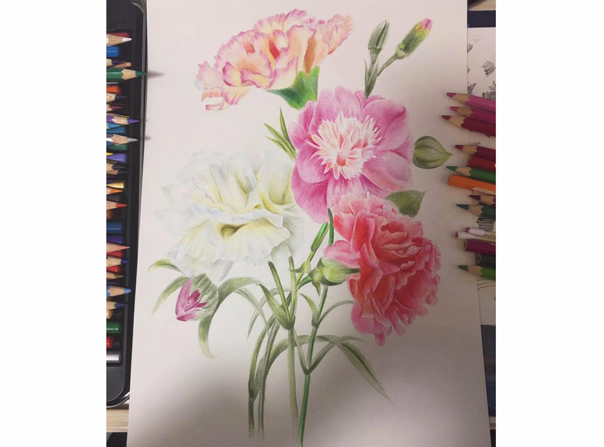 康乃馨彩铅画