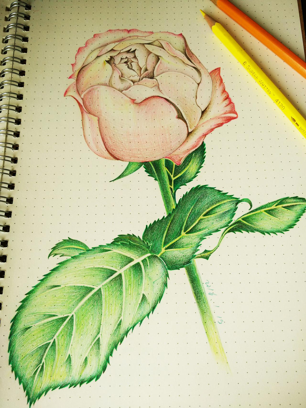 彩铅笔手绘临摹练习-03