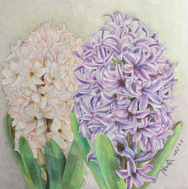 彩铅手绘 纯艺术 彩铅 野百合也有春天9 - 原创作品