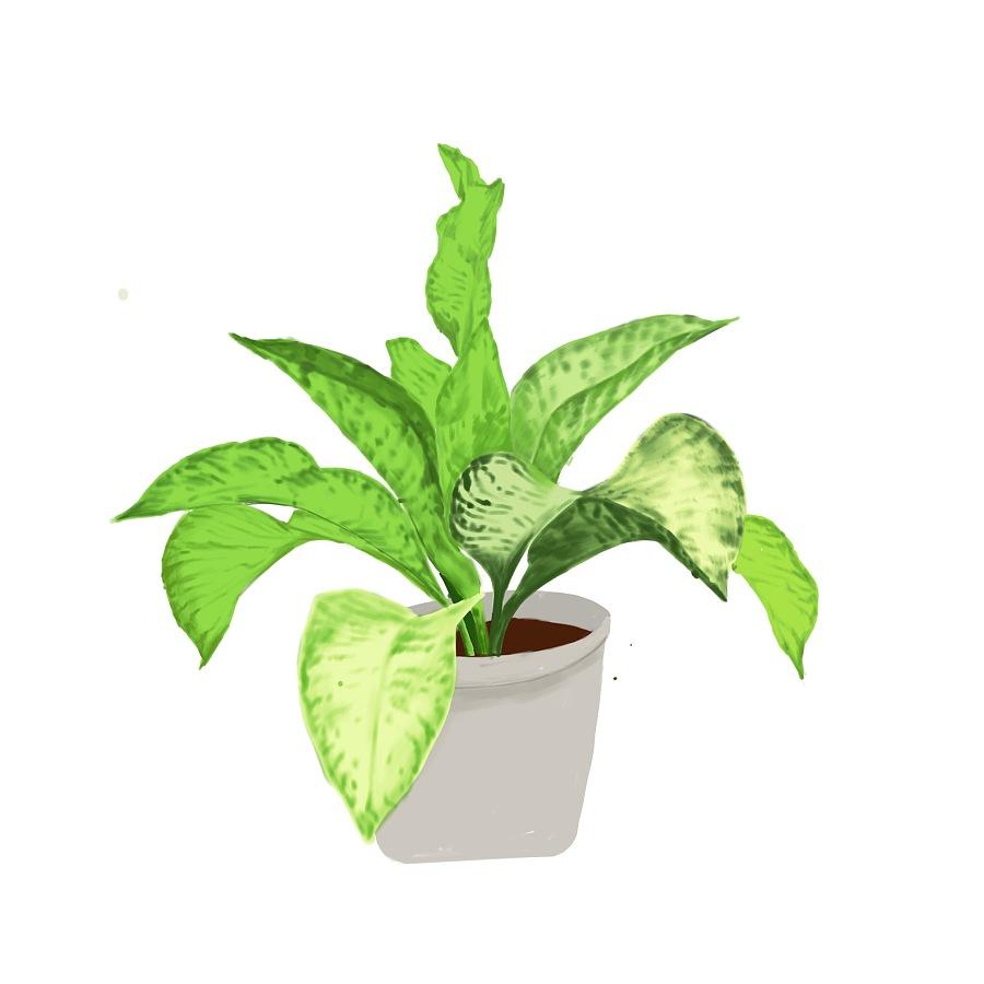 手绘顶视图绿植