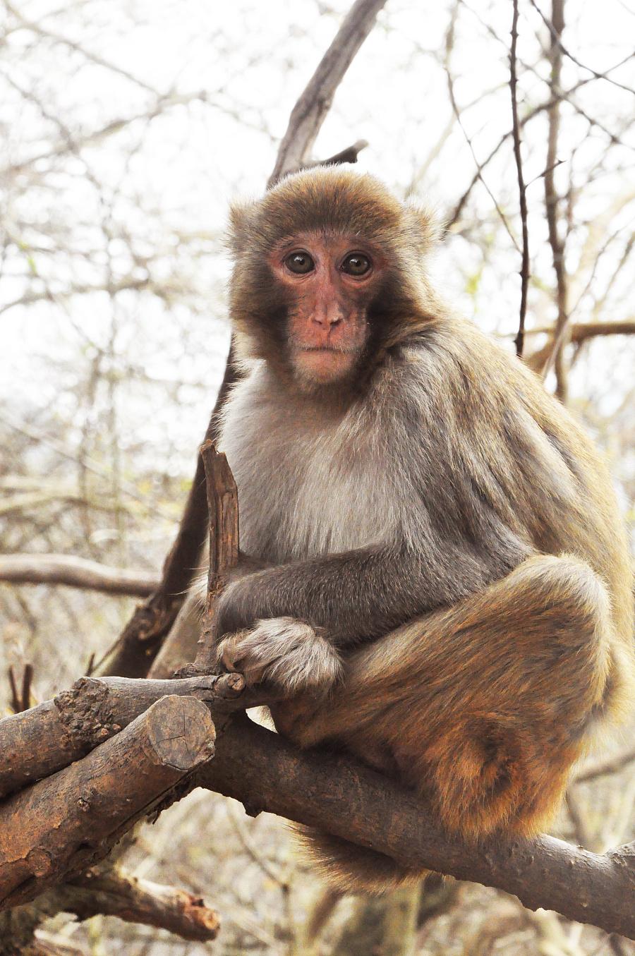 猴子为什么跟人�y.b9`�_猴子的眼神,让人看着好忧伤