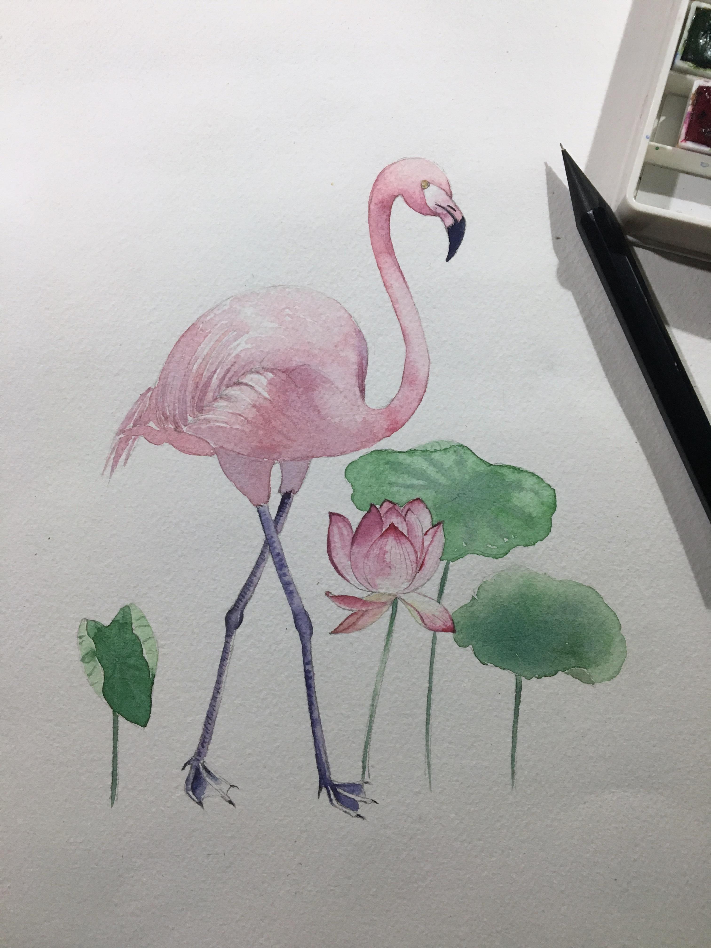 水彩火烈鸟