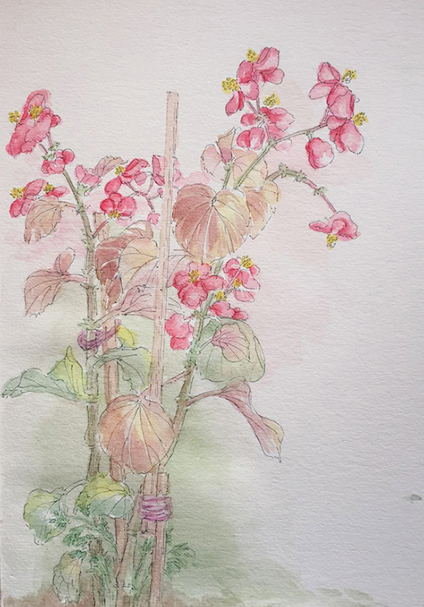 水彩手绘《海棠花》一