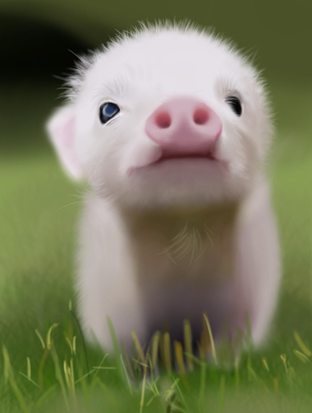 手工制作小猪动物牙齿