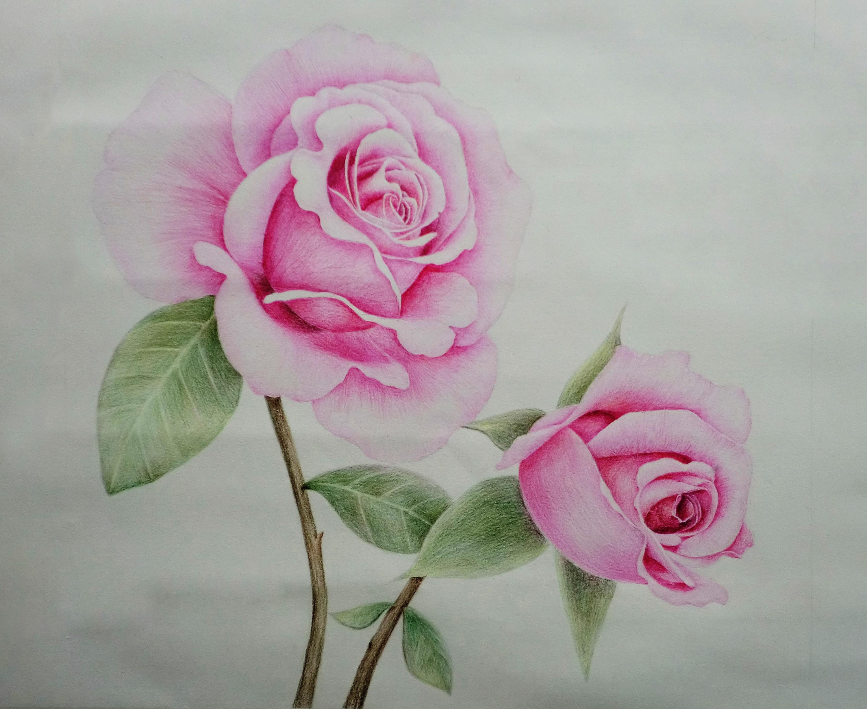 彩色铅笔手绘画 花