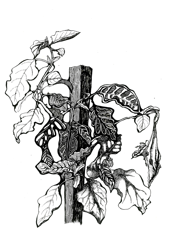 手绘|黑白装饰画(一)