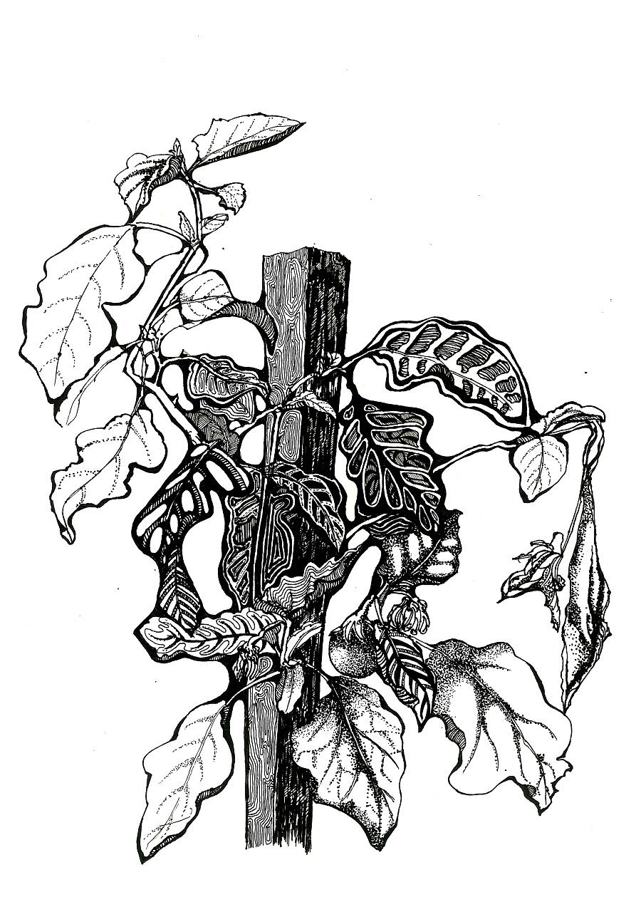 手绘|黑白装饰画(一)图片