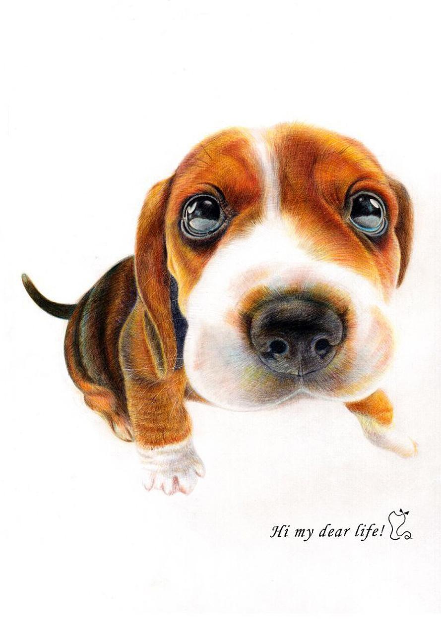 手绘彩铅—小猎兔犬  辉柏嘉48色水溶彩铅