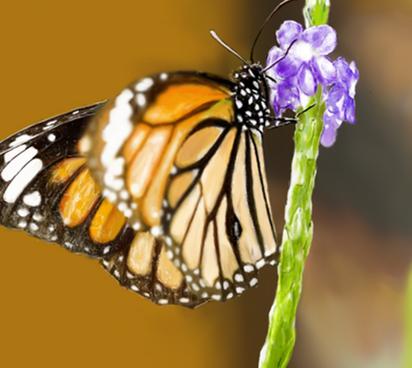 蝴蝶的结构图片大全