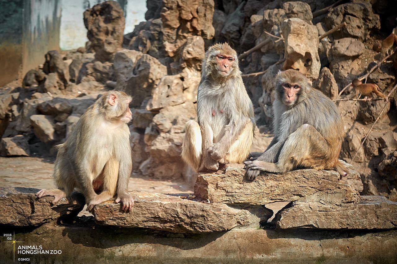 红山动物园