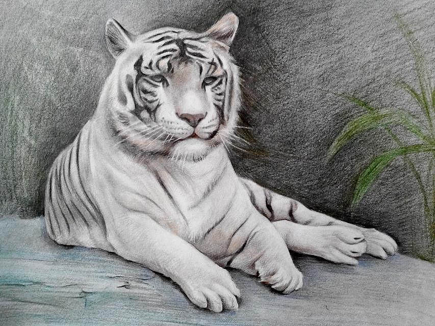 老虎铅笔画步骤