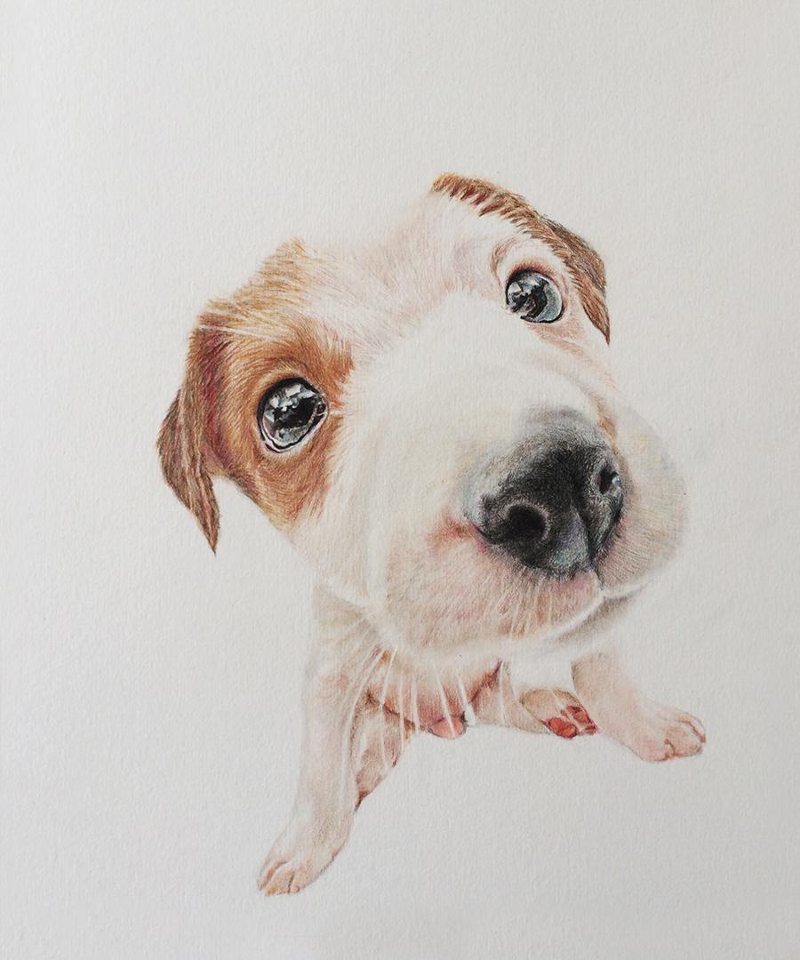 彩铅手绘动物狗