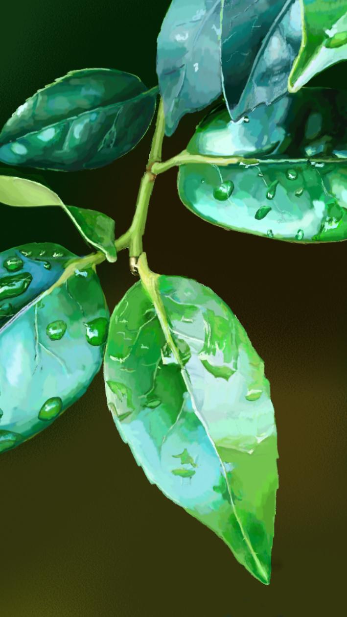 手绘板——树叶|绘画习作|插画|潘小磊