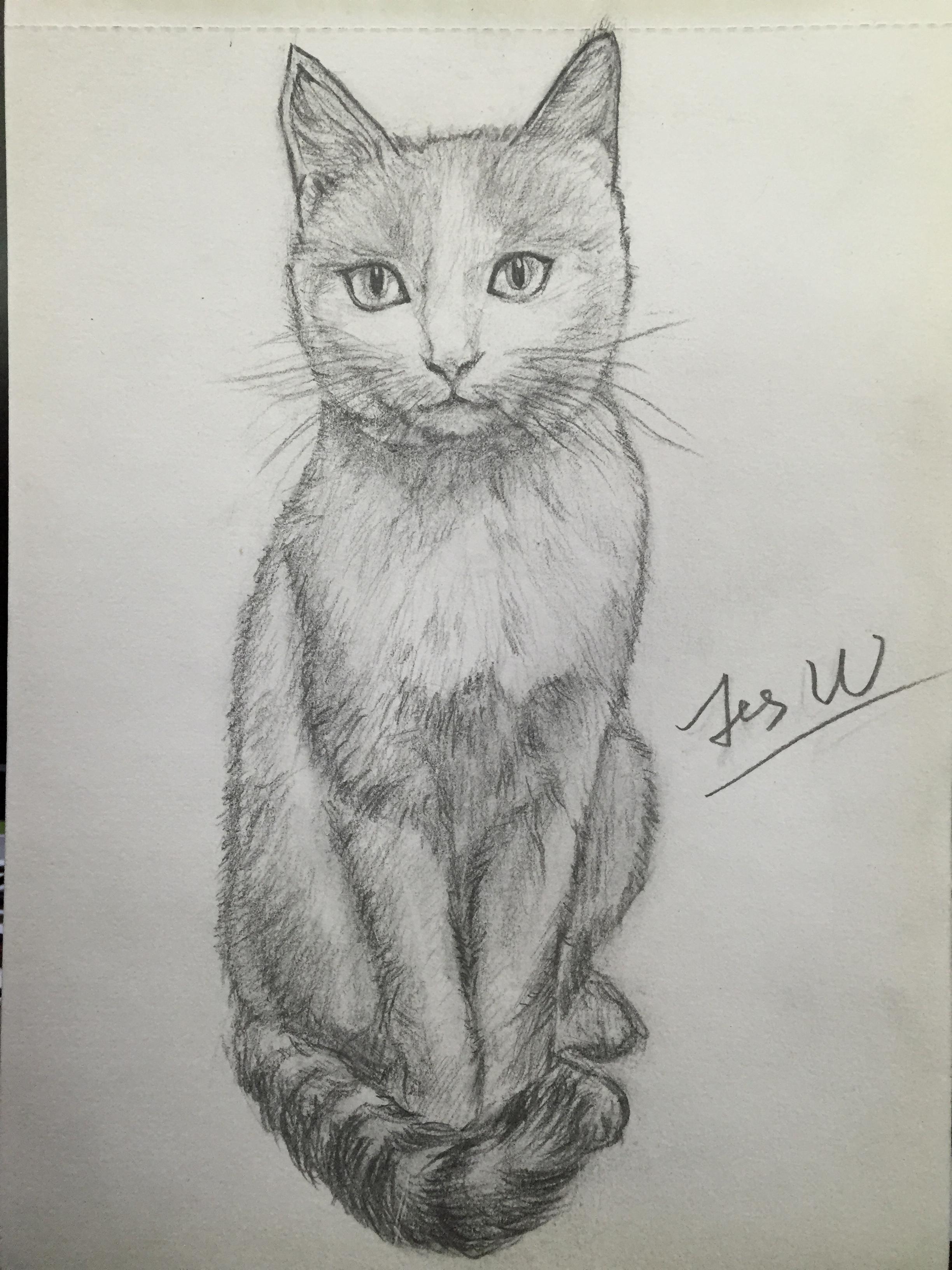 猫-铅笔画【第一弹】