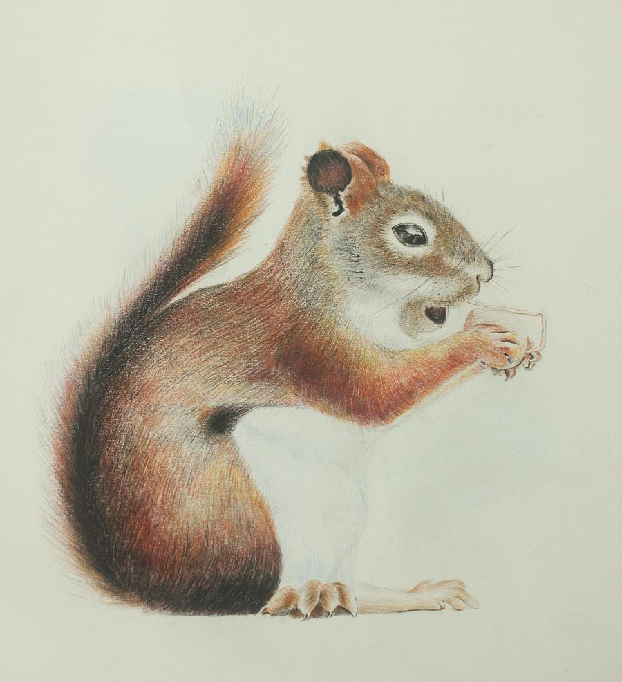 【我有画插画】彩铅要说|动物习作|绘画|ze邳州初中部明德图片
