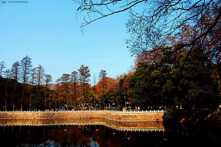 武汉大学风景|摄影|风光|江江摄影 - 原创作品 - 站酷