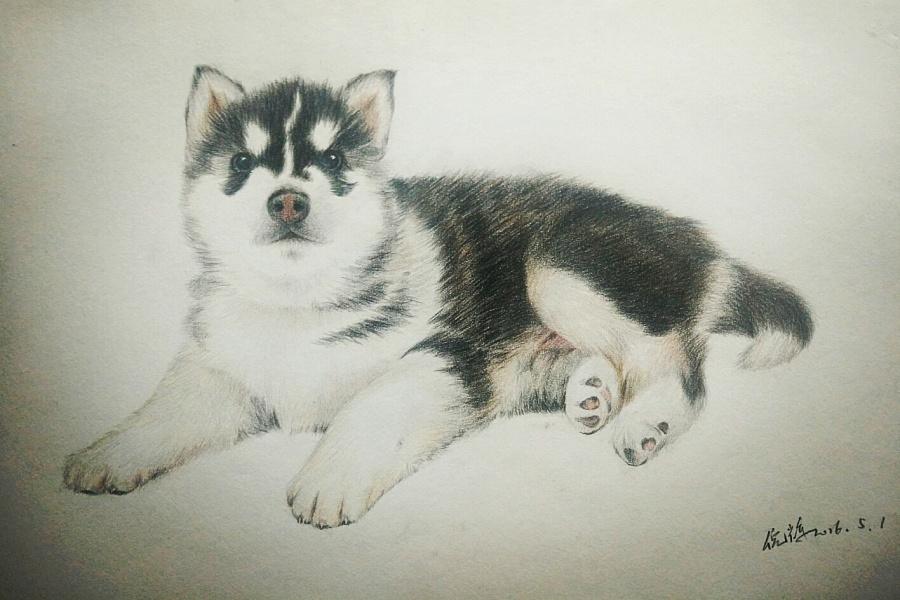 手绘动物萌图铅笔