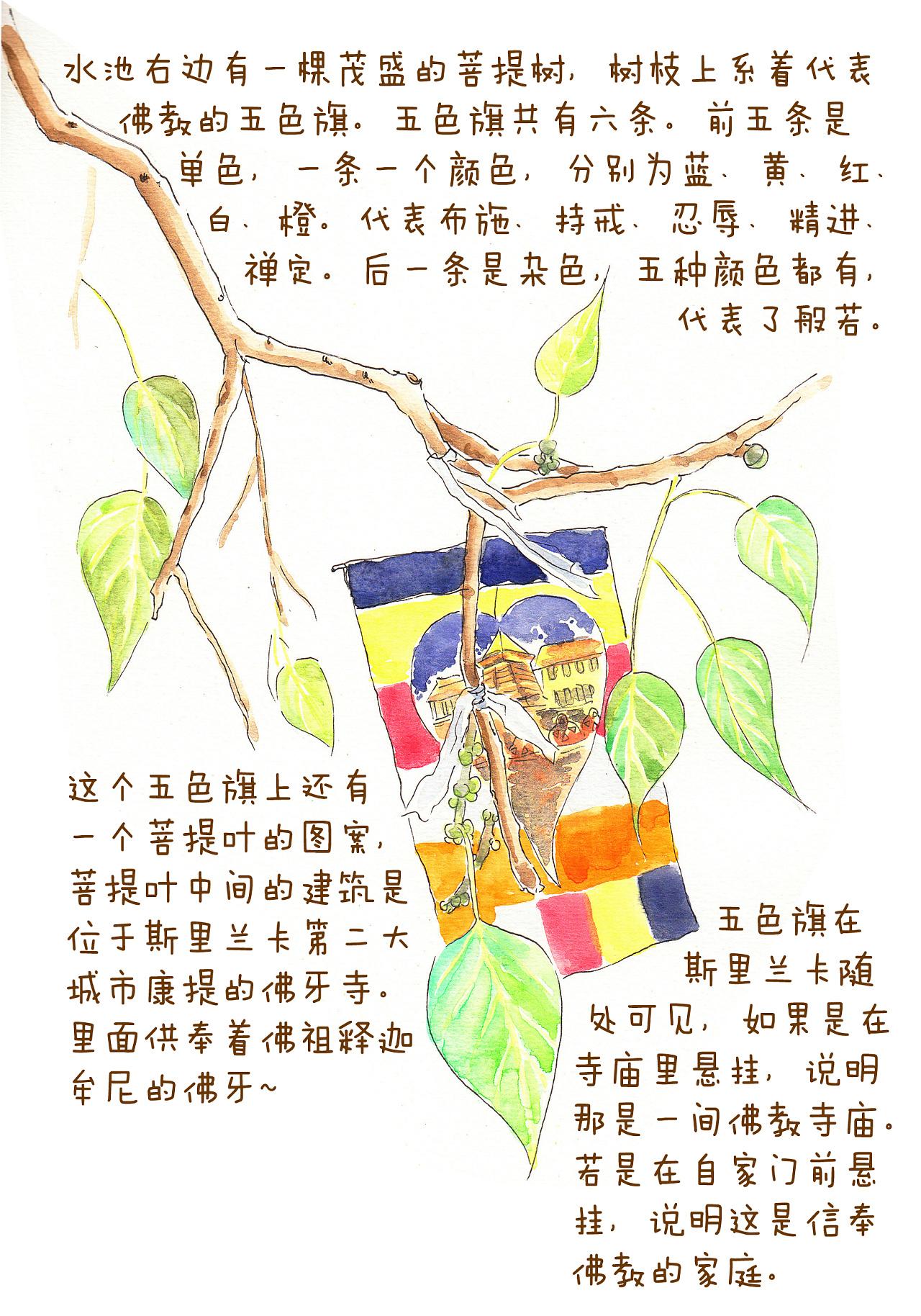 太饿公主斯里兰卡手绘旅行日记(三)