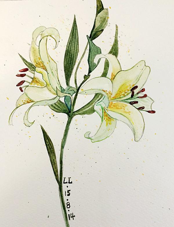 水彩百合花卉图片分享_水彩百合花卉图片下载