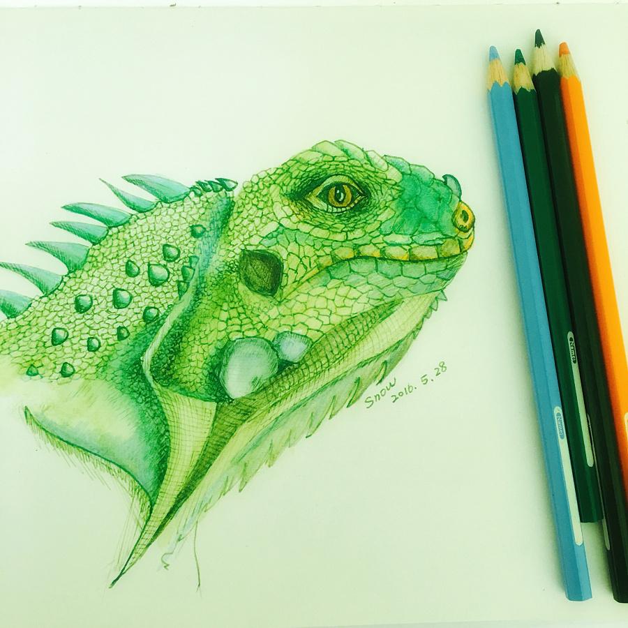 钢笔手绘——绿鬣蜥|其他绘画|插画|大兔子阿呆