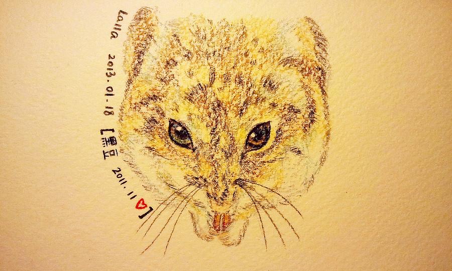 插画-仓鼠黑豆|彩铅|纯艺术|张拉拉 - 原创设计作品