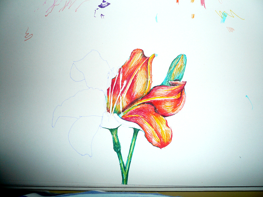 一朵写实的花而已 用特细的水彩笔画的,随便涂鸦