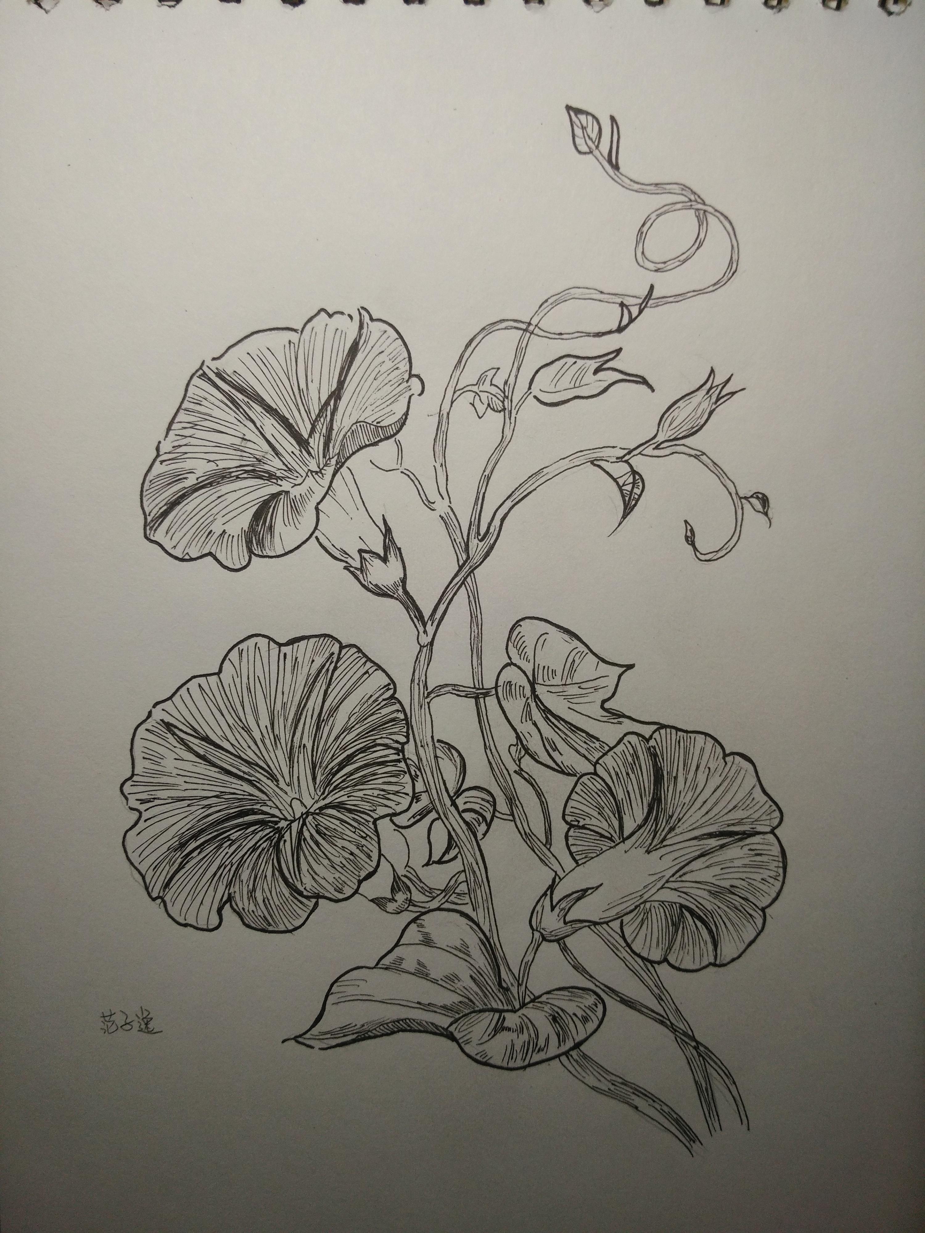 植物速写临摹