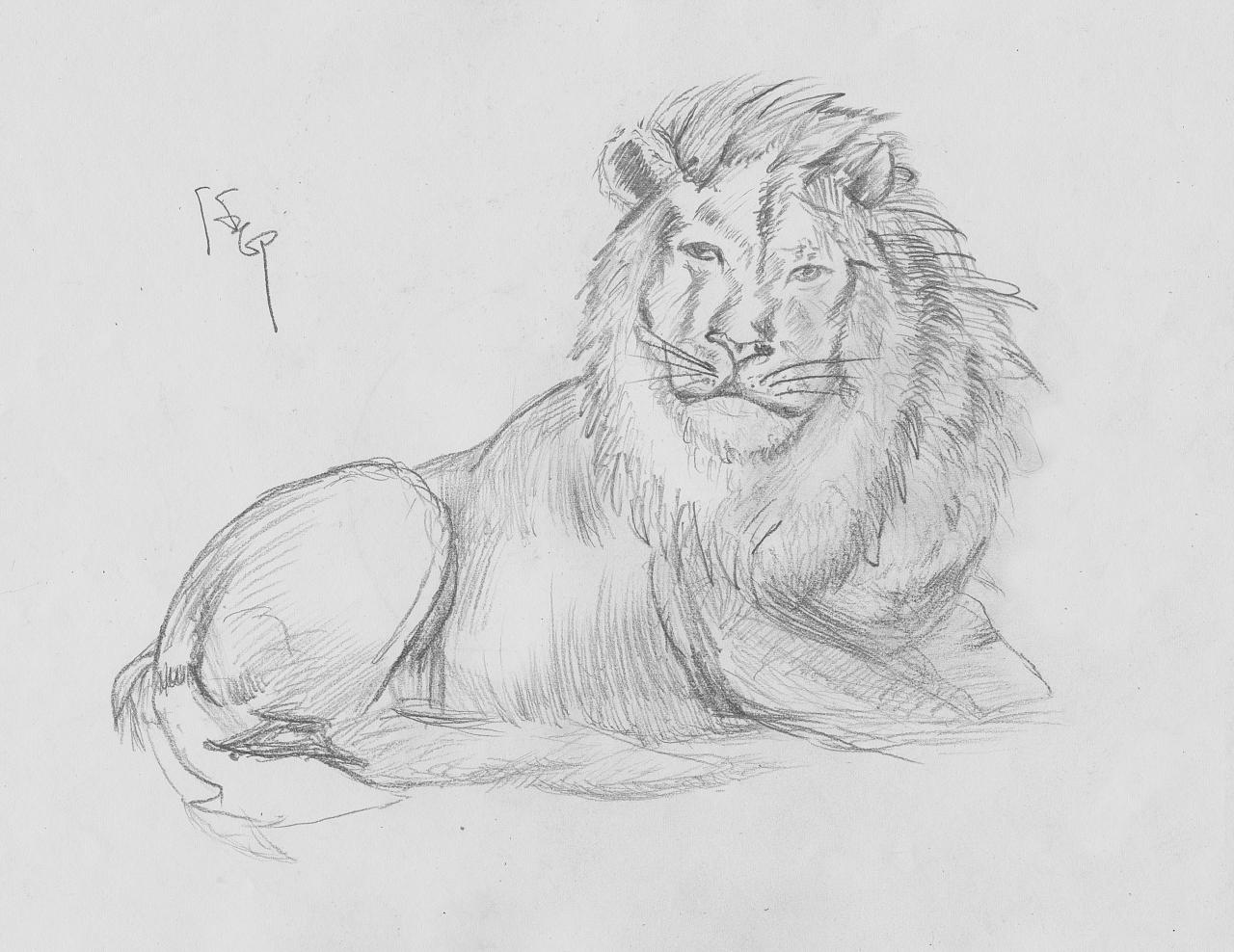 素描手绘狮子