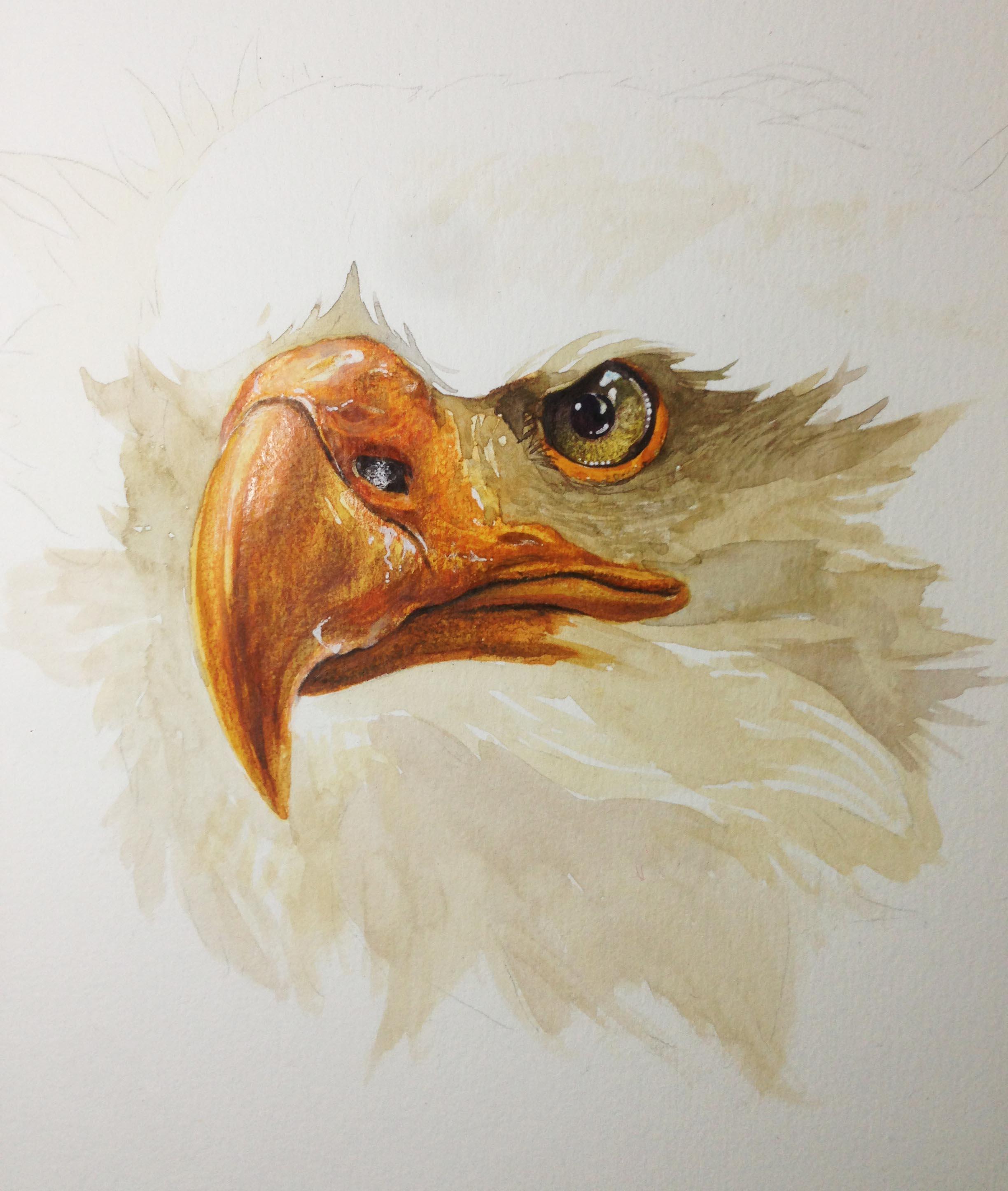 彩铅手绘 鹰